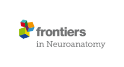 Frontiers in neuroanatomy